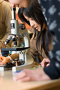 High school students look through microscope & collect data in biology class