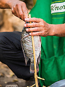 11 MARCH 2016 - LUANG PRABANG, LAOS:  A man makes grilled fish stuffed with lemongrass in the community of Chomphet, across the Mekong River from Luang Prabang. Laos is one of the poorest countries in Southeast Asia. Tourism and hydroelectric dams along the rivers that run through the country are driving the legal economy.      PHOTO BY JACK KURTZ