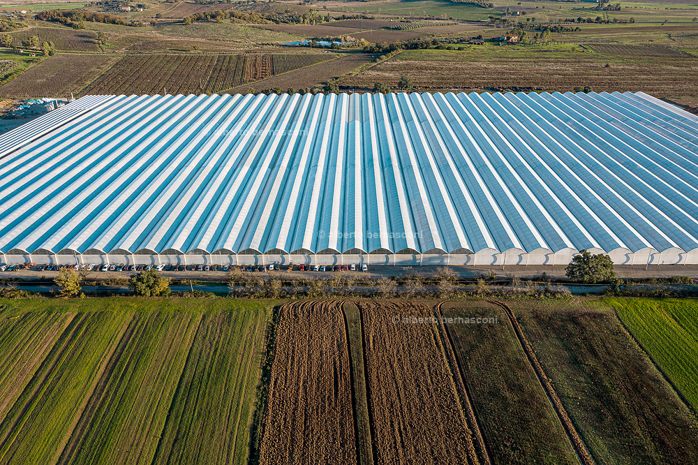Italia, Toscana, Gavorrano, SFERA , l'azienda agricola a coltivazione idroponica più grande del sud Europa. Sfera is the largest hydroponic farm in southern Europe, focused on cooultivation of tomatoes and several kind of salads , including basel