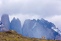 Landscape photography from a trip to Puerto Natales, Punta Arenas, Torres del Paine and Patagonia