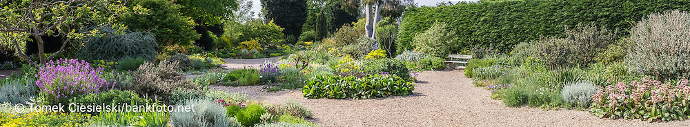 Panoramic view for one of long border in Beth Chato spring garden.
