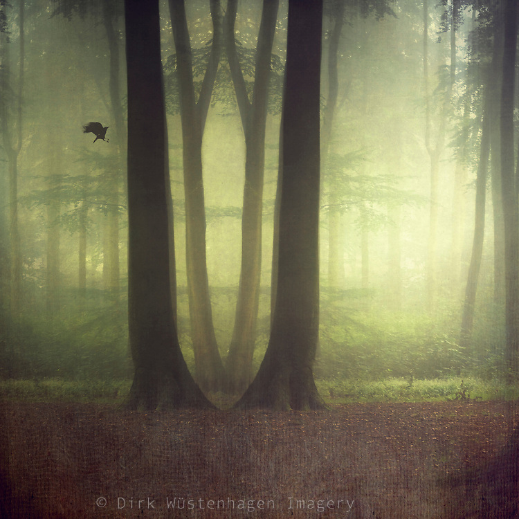 Manipulated forest scenery - texturized photograph
