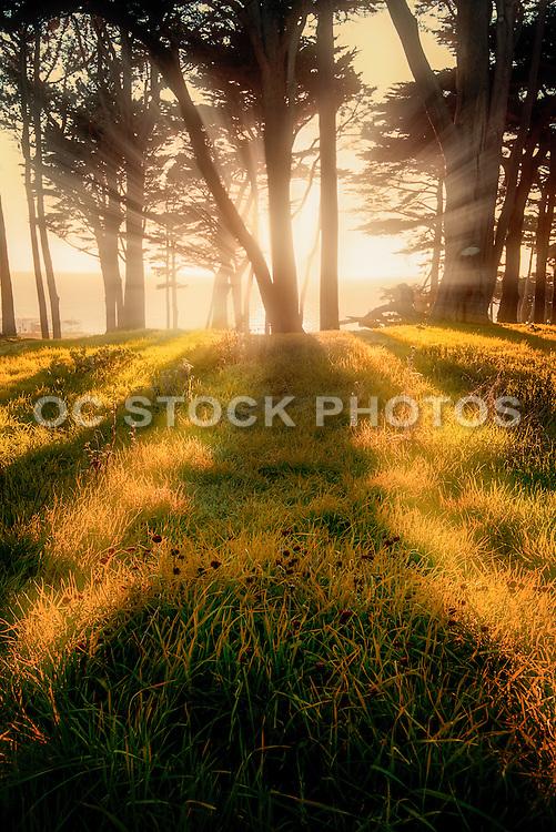 Point Lobos San Francisco California
