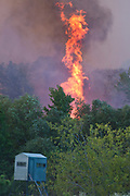 A flare up crests over the tree canopy during a fire near CR 3201 and FM 850 in Smith County on Thursday.© 2011 Jaime R. Carrero/Tyler Morning Telegraph