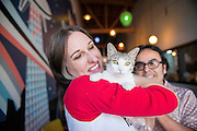 Kristin and Sergio Castillo are owners of Purringtons Cat Lounge in Portland, OR.