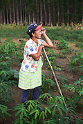 Maria de Fátima Souza, 50 anos, agricultora sem terra. Maria planta mandioca em uma área ocupada ao lado de uma plantação de eucalipto. Faz 10 anos que vive de um acampamento para o outro, em barraco de lona na beira da estrada. <br /> Eunápolis, BA - Brasil.
