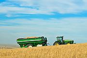 Transporting durum wheat in grain cart<br /> Carmichael<br /> Saskatchewan<br /> Canada