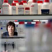 Professor Tessa Holyoake in the lab at Gartnavel Hospital, Glasgow. Picture Robert Perry  for The Times 30th Oct 2015<br /> <br /> Must credit photo to Robert Perry<br /> FEE PAYABLE FOR REPRO USE<br /> FEE PAYABLE FOR ALL INTERNET USE<br /> www.robertperry.co.uk<br /> NB -This image is not to be distributed without the prior consent of the copyright holder.<br /> in using this image you agree to abide by terms and conditions as stated in this caption.<br /> All monies payable to Robert Perry<br /> <br /> (PLEASE DO NOT REMOVE THIS CAPTION)<br /> This image is intended for Editorial use (e.g. news). Any commercial or promotional use requires additional clearance. <br /> Copyright 2014 All rights protected.<br /> first use only<br /> contact details<br /> Robert Perry     <br /> 07702 631 477<br /> robertperryphotos@gmail.com<br /> no internet usage without prior consent.         <br /> Robert Perry reserves the right to pursue unauthorised use of this image . If you violate my intellectual property you may be liable for  damages, loss of income, and profits you derive from the use of this image.