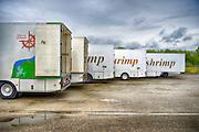 Nederland, the Netherlands, Zoutkamp, 11-8-2016 Vrachwagens van de Rousant waarin garnalen vervoerd worden . In het Groningse dorp Zoutkamp is na de indamming van de Lauwerszee de garnalenvisserij nagenoeg verdwenen. Wel is er nog een reparatiewerf, de palingrokerij van palingvisser Gaele Postma, het visserijmuseum, de visafslag van de Rousant, waar garnalenkroketten gemaakt worden, en een jachthaven waar in de zomer veel recreatieschepen liggen. Toch vinden nog steeds veel mensen uit dit dorp werk in die sector. Een deel van de economische teruggang is opgevangen door het toerisme en de pleziervaart . Foto: Flip Franssen