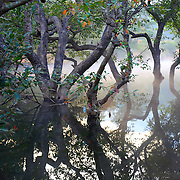 Trees in water. the Fog created the drama.