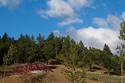 St. Innocent winery & estate vineyard, Willamette Valley, Oregon