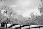 Trees behind a fence in rural Kentucky.  Infrared (IR) photograph by fine art photographer Michael Kloth. Black and white infrared photographs