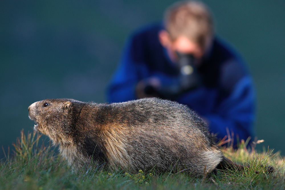 Photographer with marmot (model release 02/08/HTNP), Hohe Tauern National Park, Carinthia, Austria