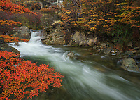 Fall color along a stream in Los Glaciares National Park, Argentina