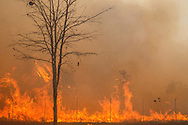 Brasilia, Brasil, 24/09/2011: Fire destroys the cerrado (Brazilian midwest forest) in Brazil's capital.   (Photo: Caio Guatelli)