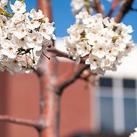 Campus Scenes, Spring, Eric Torres Photos