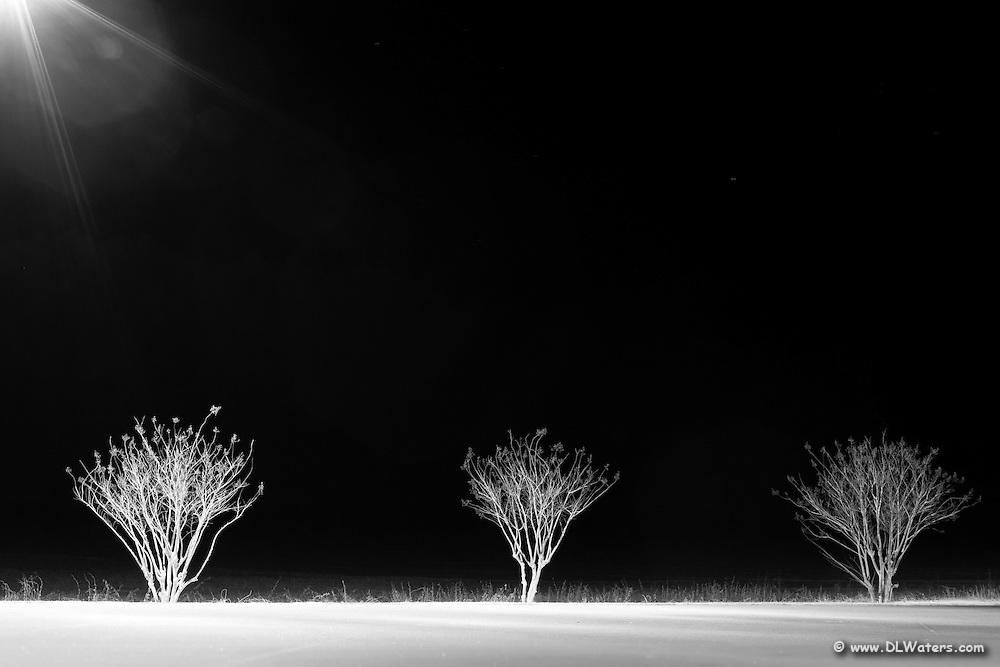 Eerie black and white night photo of a row of trees.