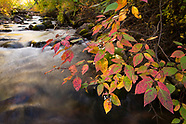 Fall colors - Brush Creek, Eagle County
