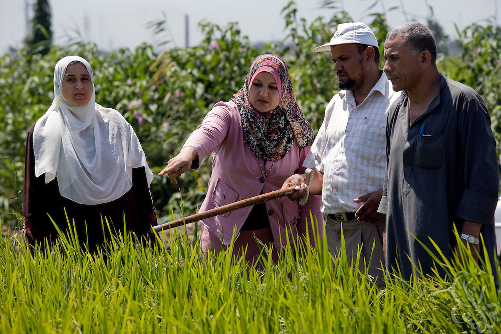 Egyptian farmers and water conservation activists discuss irrigation and water conservation at the edge of a rice field August 05, 2008 in the Delta town of Bahr el-Sheik Ibrahim, 130 kilometers NW of Cairo. Because an estimated 80% of Egypt's total available fresh water is used for irrigation of agricultural land, efforts are under way to improve the countries methods of water conservation and irrigation efficiency.