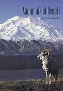 Alaska Geographic, Mammals of Denali, Cover, Ram, Dall Ram, Dall Sheep, Dall Sheep Ram