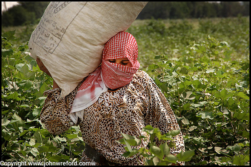 Syrian Women Working In The Cotton Fields Of North Eastern Syria