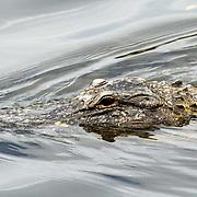 Vakantie 2015, Miami, krokodil