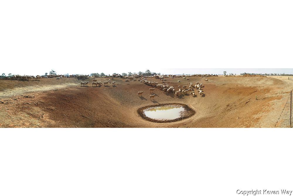 sheep at dam NSW
