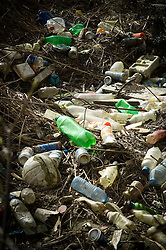 Discarded litter and waste, mostly plastic drinks bottles, caught in reeds, River Soar, Leicester, England, UK.