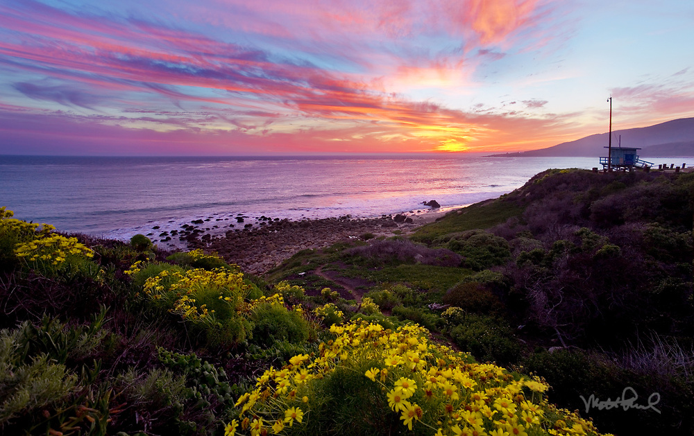 I was watching the clouds all day. I had a feeling it was going to explode for sunset. So I texted my friend and we bolted down to Nicholas Canyon Beach. We found some coreopsis that were blooming so it would pair perfectly with some color! Sure enough the sky exploded and was happy to get some shots.