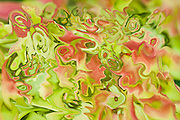 abstractions of tree leaves with many shades. Soft colors of the nature in summer,red and green.
