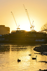 © Licensed to London News Pictures. 26/02/2014. London, UK. Canada geese feed in the low waters of the Thames.  Sunrise over the River Thames at Hammersmith in West London today 26th February 2014. Photo credit : Stephen Simpson/LNP