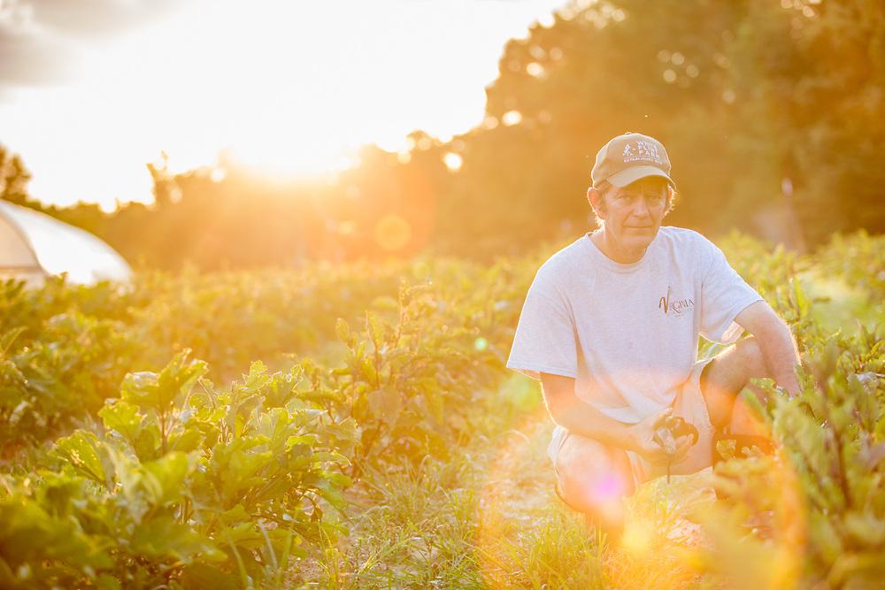 Farmer tends to his crops in Danville, Virginia