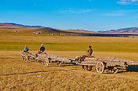 Mongolie, Asie Centrale, Region d'Arkhangai, Nomad partent en char à boeuf pour amener du bois // Mongolia, Central Asia, Arkhangai Province, nomads bringing some woods on the yak chariot