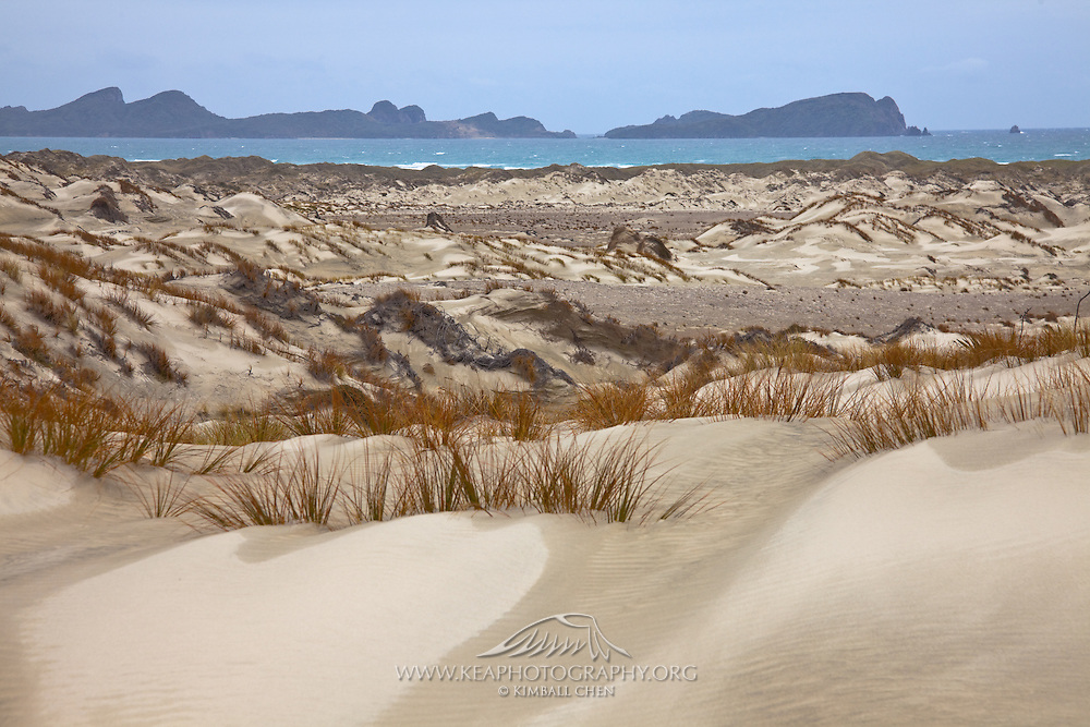 sandy dunes at Mason Bay, Stewart Island, New Zealand