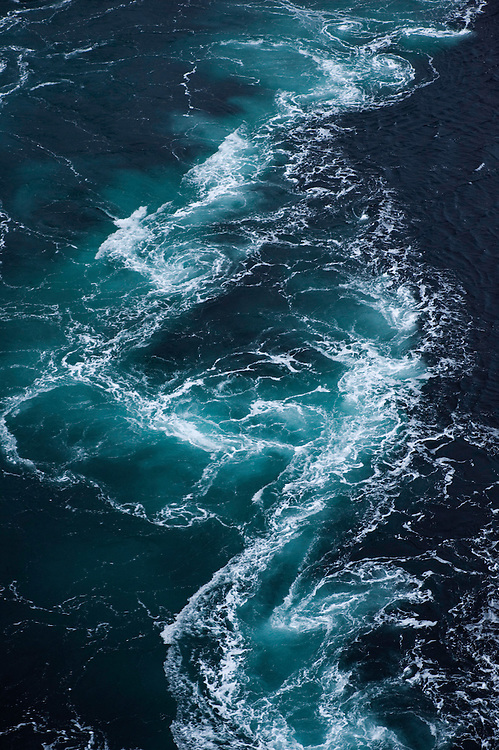 The whirlpools of Saltstraumen.Atlantic marine life, Saltstraumen, Bodö, Norway