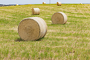 Round hay bales in a paddock on a farm after baling in rural Monteith, South Australia, Australia. <br />