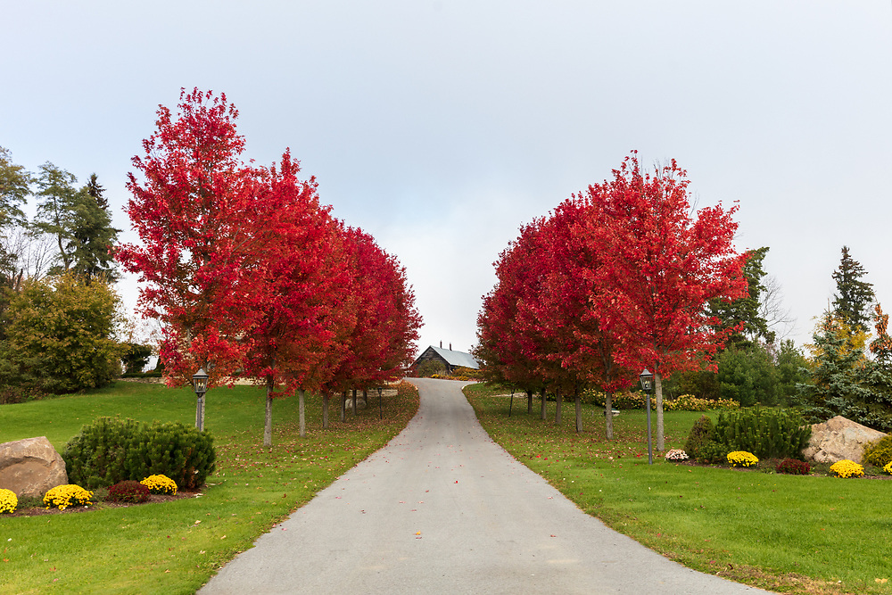 https://Duncan.co/fall-colour-driveway
