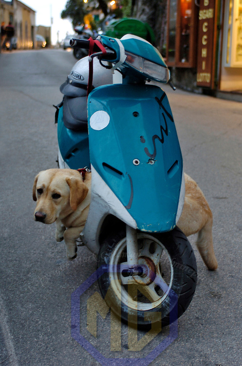 7 May, 2004:  A dog waits on his owners scooter in the street at dusk in the town of Positano on May 7, 2004.