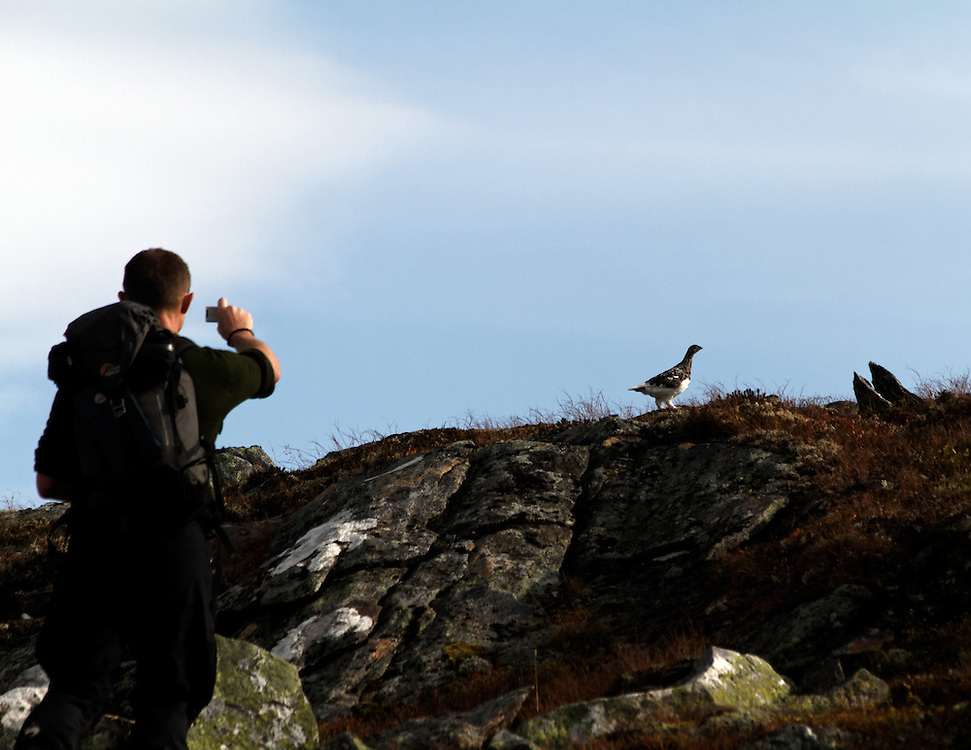 Man photographing a grouse