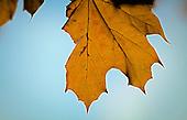 88 Leaves