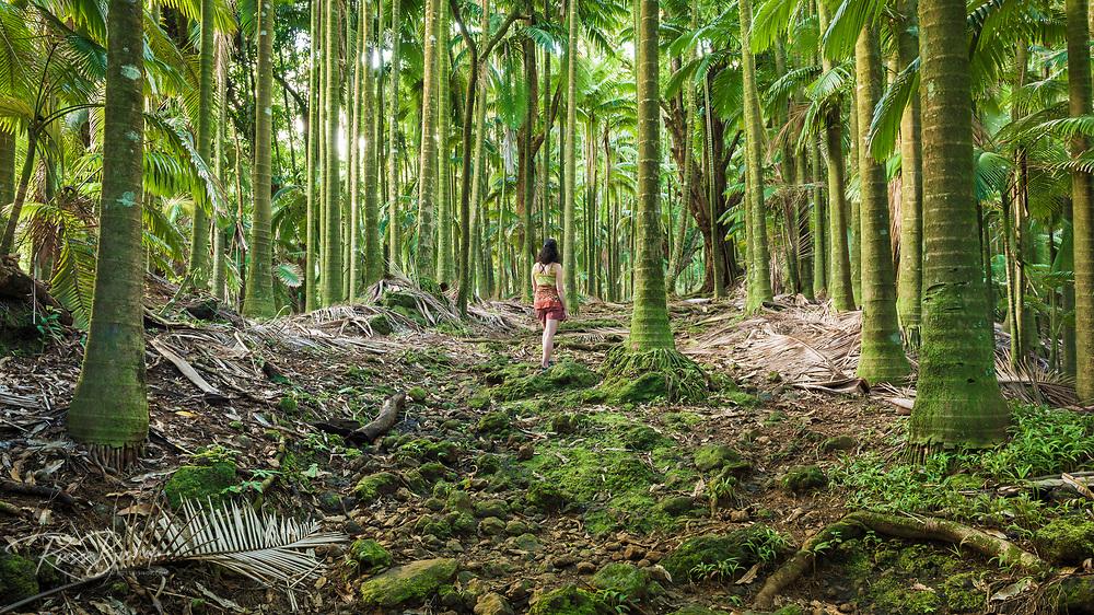 Hiker in palm forest, Onomea Bay, Hamakua Coast, The Big Island, Hawaii USA