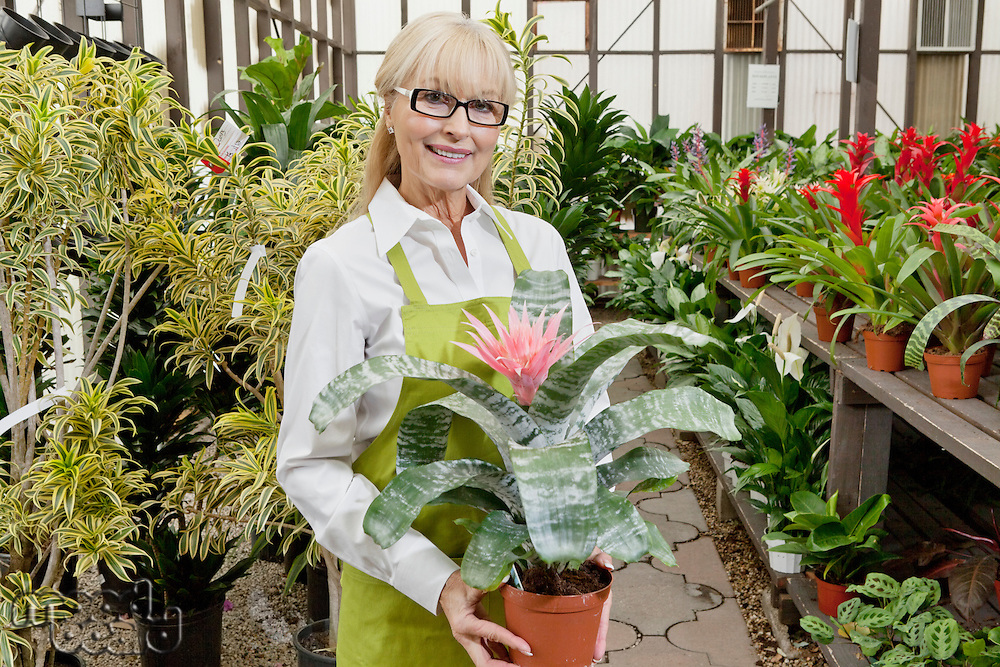 Portrait of a senior gardener holding pot plant in garden center