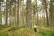 Pine marten (Martes martes), Black Isle, Scotland, UK. July 2010. Adult female photographed by camera trap.