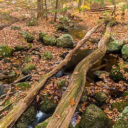 A small stream in late fall in Barrington, New Hampshire.