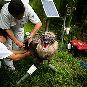 "CHIBA, JAPAN - AUGUST 10:  Members of JA Kisarazu-shi, shows a robot named ""Super Monster Wolf"" a solar powered robot designed to scare away wild animals from farmer's crops in Kisarazu, southwestern Chiba Prefecture, Japan on August 10, 2017. (Photo by Richard Atrero de Guzman/NUR Photo)"