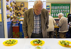© Licensed to London News Pictures.04/08/15<br /> Egton, UK. <br /> <br /> <br /> One of the entrants to the the annual Egton Gooseberry Show checks out the other entries as they are displayed on a table after being weighed.<br />  <br /> There are only two Gooseberry societies left in the country. One in Cheshire and one at Egton in North Yorkshire. The annual show in Egton uses traditional Avoridupois scales to measure the weight of the berries and members of the society are fanatical about trying to grow the best berries each year. <br /> <br /> Photo credit : Ian Forsyth/LNP