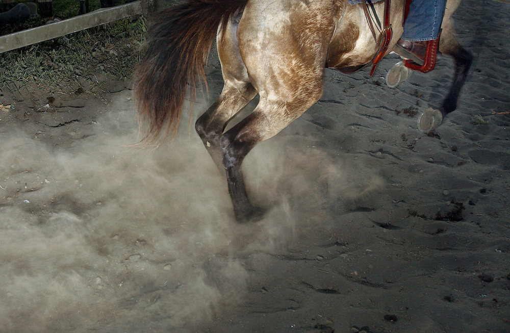 SAN CARLOS, PANAMA - FEBRUARY 11: A cowboy and his horse burst out of the gates, kicking up dust, while competing in a lasso competition in San Carlos, near Boquete, Panama, on February 11, 2007. In the competition, each heat features one town's team versus another in a tournament bracket style. The speed of the calf's capture determines points.  (Photo by Logan Mock-Bunting)