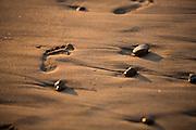Sandy Footprint On The Beach
