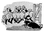 The Ludlow Dog