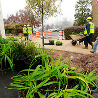 Thomas Wells | BUY AT PHOTOS.DJOURNAL.COM<br /> Matthew Ash, center, and Kaleb Felks begin unloading all the ground cover for be planted around the Willow Oaks as work continues on West Main Street in Tupelo on Thursday.